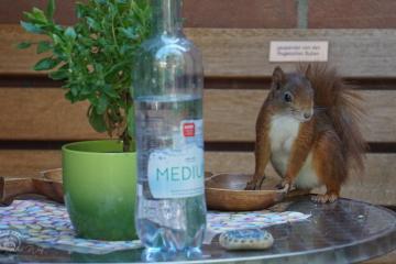 eichhörnchen wartet auf bedienung . #43