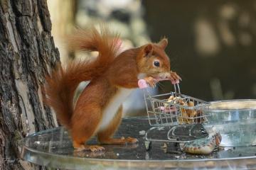 eichhörnchen einkaufswagen #49