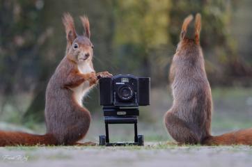 eichhörnchen shooting  #42