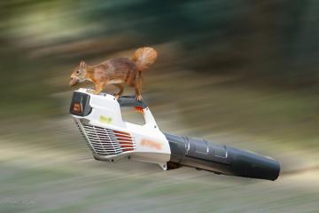 eichhörnchenflug2 #46