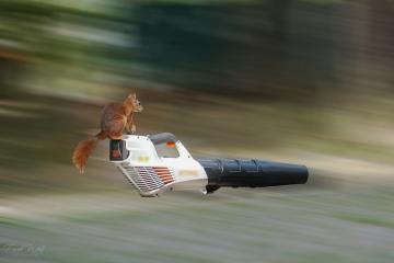 eichhörnchenflug1 #47