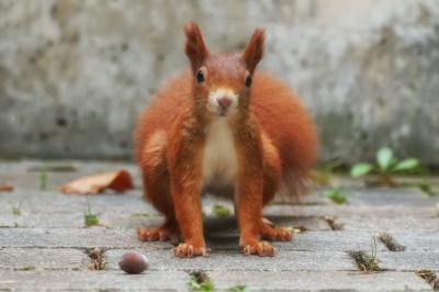 eichhörnchen.01102020_k