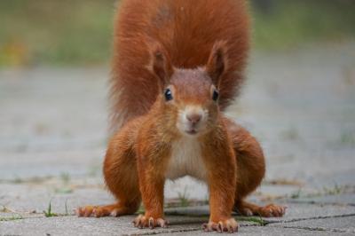 eichhörnchen.01102020_k2
