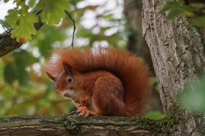 eichhörnchen.01102020_k3