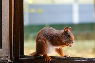 eichhörnchen.10082020_k