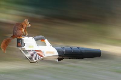 eichhörnchen.13072020_k