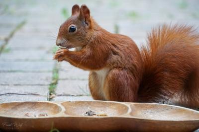 eichhörnchen.14092020_k