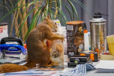 eichhörnchen.16072020_k