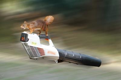 eichhörnchen.16072020b_k