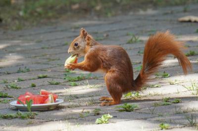 eichhörnchen.20072020b_k
