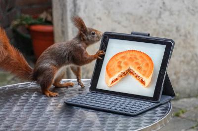 eichhörnchen.20200113-3bhoerni13012020.175_k