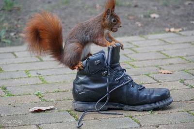 eichhörnchen.20200116-1hoerni17012019.054_k