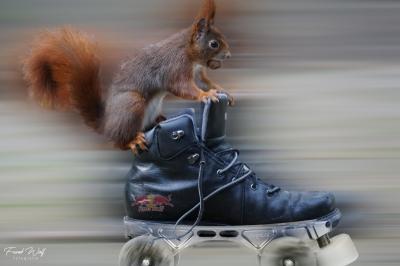 eichhörnchen.20200116-20200116-hoerni17012019.054bea3-Bearbeitet2c-2c_k