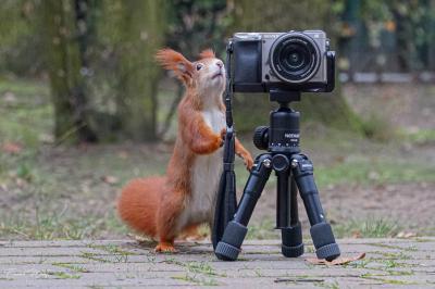 eichhörnchen.20200123-hoerni23012020.026_k