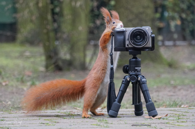 eichhörnchen.20200123-hoerni23012020.049_k