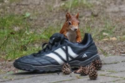 eichhörnchen.22062020_k