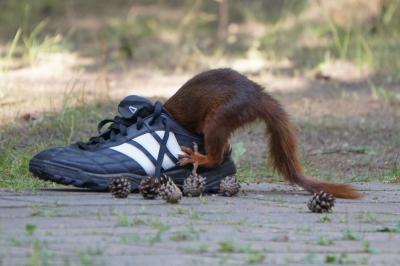 eichhörnchen.23062020_k