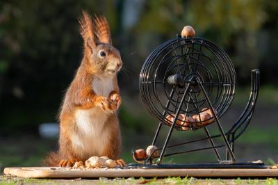 eichhörnchen.hoerni05022020.097-2_k