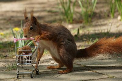 eichhörnchen.hoerni24042020.089-2_k