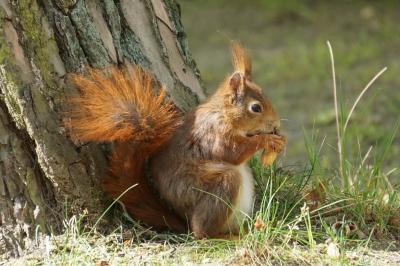 eichhörnchen.hoerni24042020.097_k