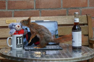 eichhörnchen.hoerni290420.078_k