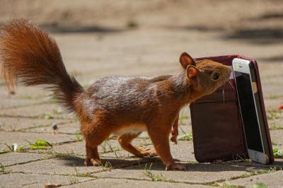 eichhörnchen.nussnotrufzentrale20072020_k