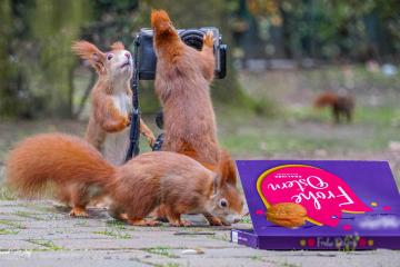 Frohe Ostern mir den Eichhörnchen